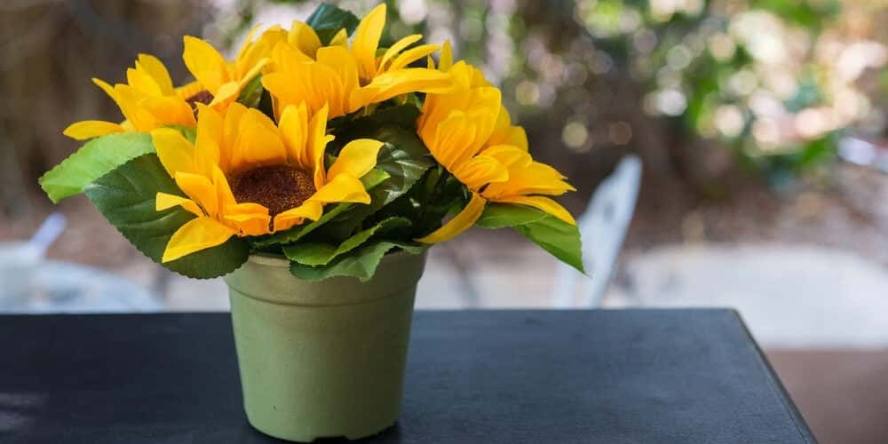 sunflowers in a green pot