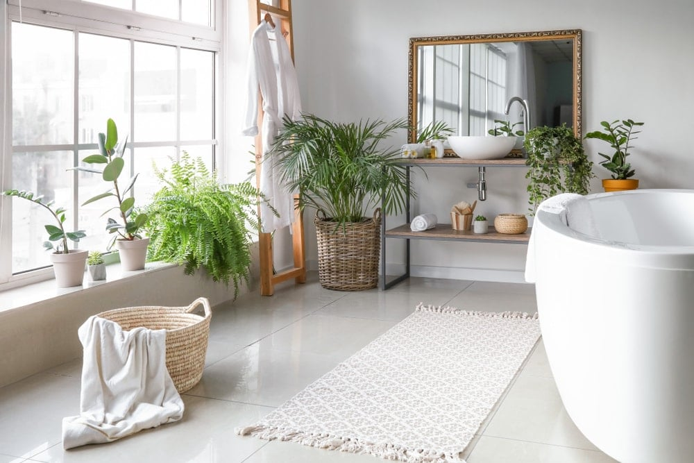 10 Best High Humidity Plants for Your Bathroom
