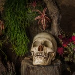 8 Poisonous Houseplants that Are Dangerous for Children and Pets
