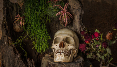 10 Poisonous Houseplants that are Dangerous for Children and Pets