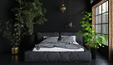 8 Best Indoor Trees That Thrive in low Light e1602903531797