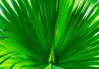 Mexican Palm Growth and Care Guide