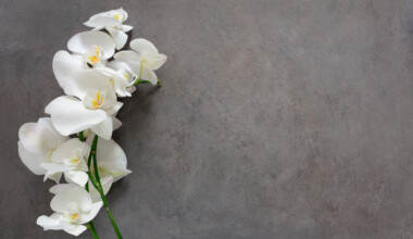 Orchids Care Growing Guide grey background e1602642584595