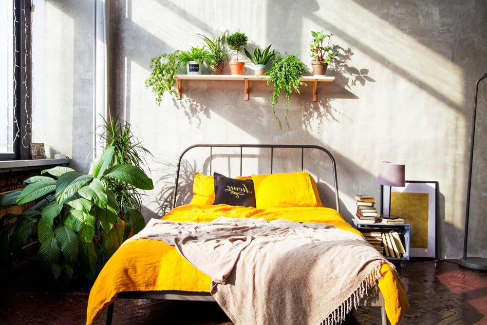 The Best Indoor Houseplants for the Bedroom e1602990225928