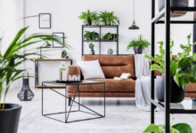 10 Best Plants for Apartments