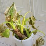 8 Mistakes That Can Kill Your Houseplants