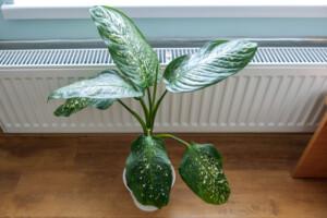 heating houseplant