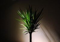 Can Houseplants Survive in the Dark?