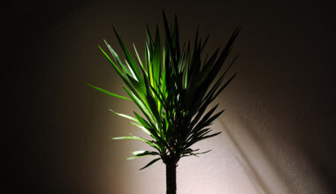 houseplant in dark