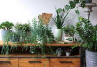 Top 10 Indoor & House Plant Care Tips