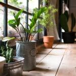 11 Benefits of Having Houseplants in Your Home