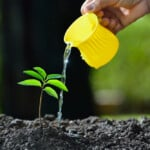 5 Signs you are Overwatering Your Plants