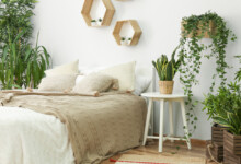 How to Make Sure Your Houseplants are Thriving